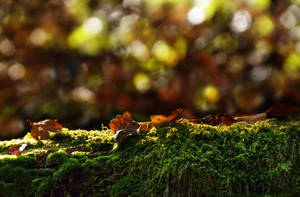 Mossy tree trunk STOCK by AStoKo