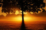 Tree Sunset Background STOCK by AStoKo