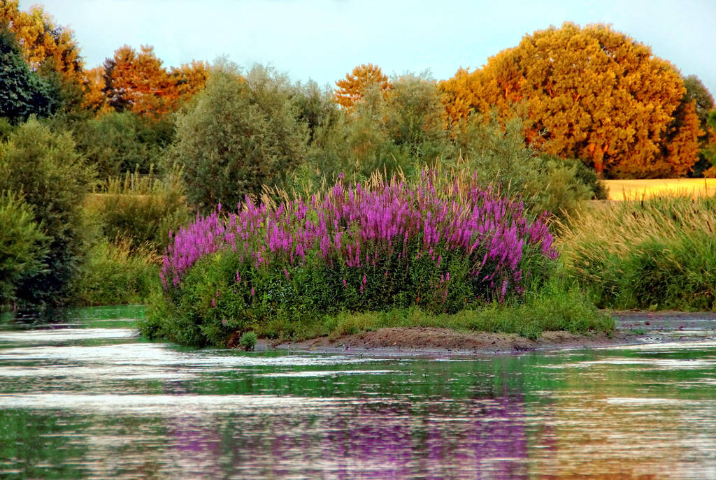 Re-natured little river by AStoKo