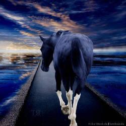 Horse Avi 18 by TronyRoan
