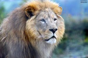 Lion's Pose by ZaraaLeanne
