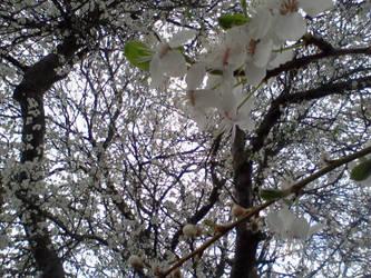 Blossom by tye104