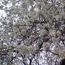Springtime by tye104