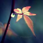 Autumn breath by Inside-my-ART