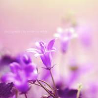 bloom by Inside-my-ART