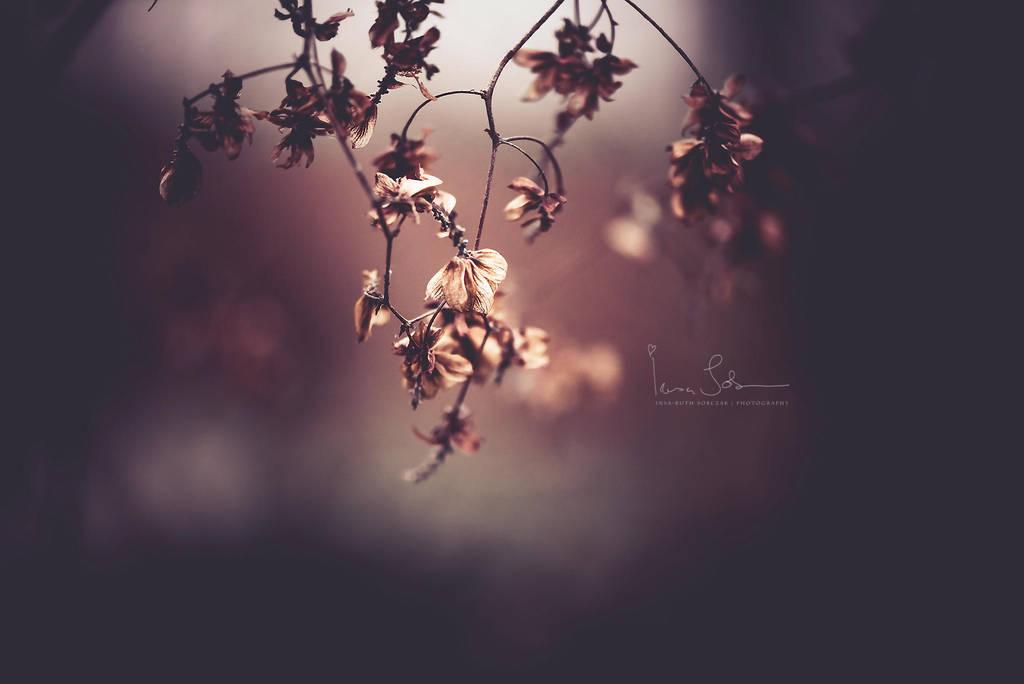 Evening Serenade by Inside-my-ART
