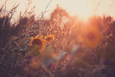 Sunflowers by Inside-my-ART