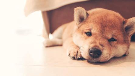 Sleepy baby by SukiSan