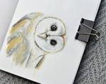 Barn owl sketch by anguana