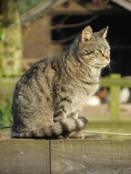 Cat in the sun by Minarya