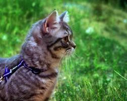 El paseo Kitten Stock 3 by ElenaDudina