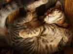 Asleep Kitten Stock 7 by ElenaDudina