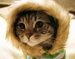 Hello Kitten Stock 8 by ElenaDudina
