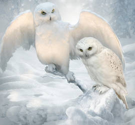 Winter owls by ElenaDudina