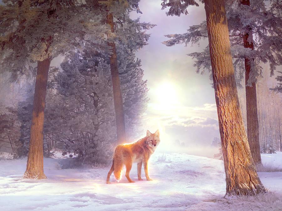 Winter scene by ElenaDudina