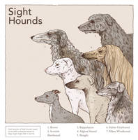 Sight Hounds by Rimrack