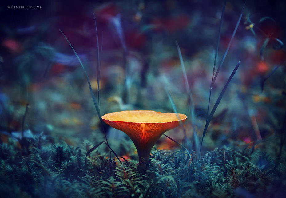 Untitled by Panteleev-Ilya
