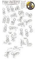 Pony Anatomy Tutorial by CyberToaster