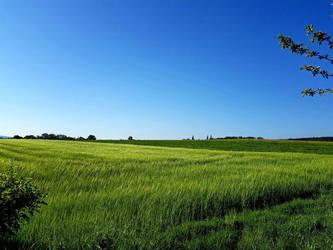 Fields by TheSchnitter