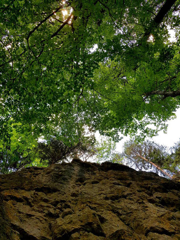 Rocks 'n' leaves by TheSchnitter