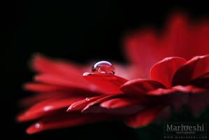 Drop by Marloeshi
