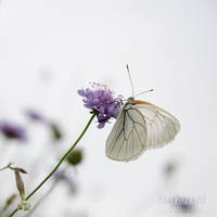 Fragile by Marloeshi