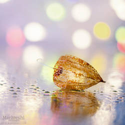 Physalis by Marloeshi