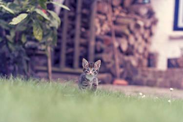 In the backyard by Marloeshi
