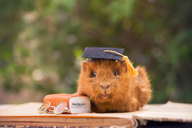 Graduation Pig by Marloeshi