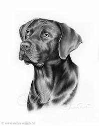 Labrador by AtelierArends