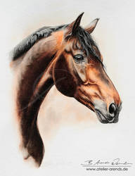 Watercolor Horseportrait by AtelierArends