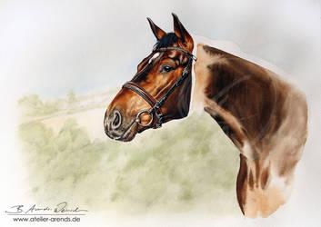 Watercolor-Horseportrait-Wip by AtelierArends