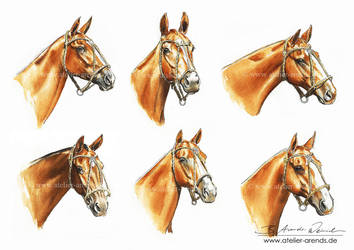 Polo Horses 2016 by AtelierArends