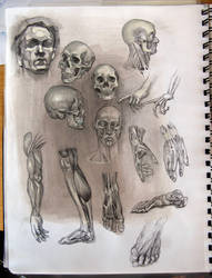 Anatomy studies by AnaviTil
