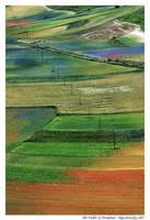 The Fields Of Mondrian by BigLebowsky