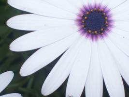 white flower by sven-is-kool
