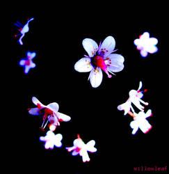 night flowers by willowleaf