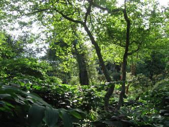 Finnerty Gardens by willowleaf