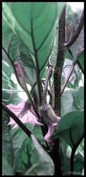shy eggplant by willowleaf