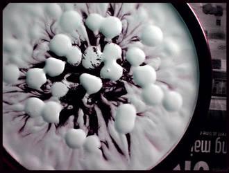 black flower by willowleaf