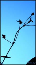 Sky by willowleaf
