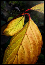 Bright Leaves by willowleaf