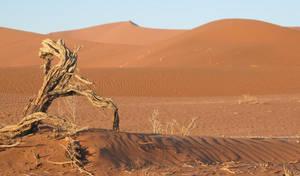 desert by Latana