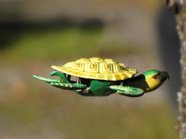 The Incredible Flying Turtle by Petritap