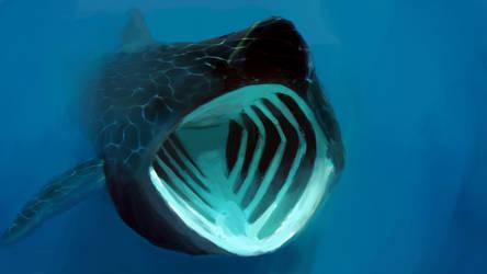 Basking Shark by MetricZero