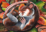 Pannya ACEO Card by Sternen-Gaukler