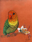 Melon Birb by Sternen-Gaukler