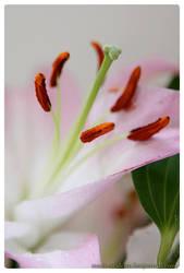 flower erotica ii. by LinAt