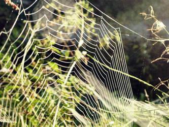 Web by Alchemija