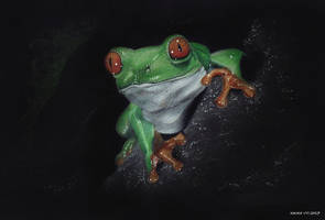 Frog by Carolineys